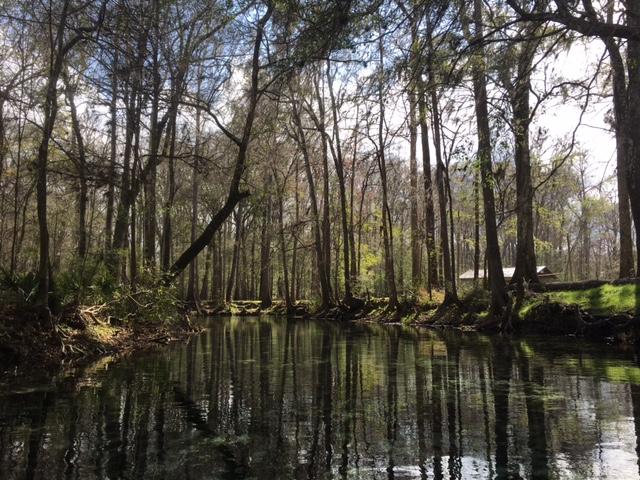 dogwood spring2