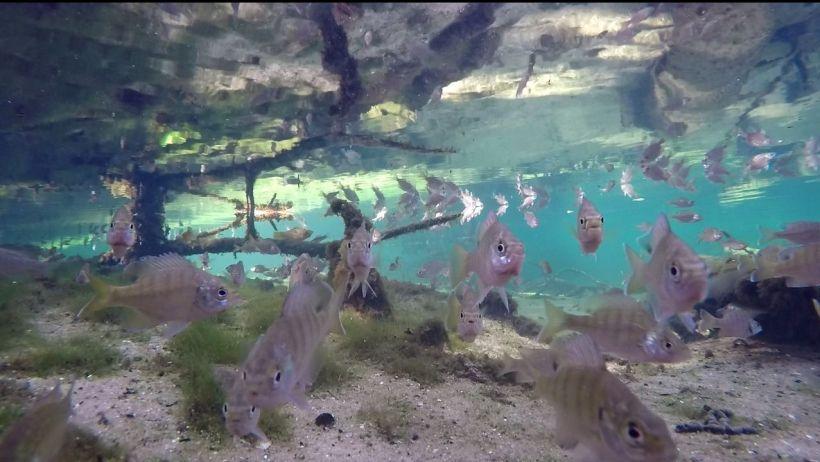 sunfish surface breathing