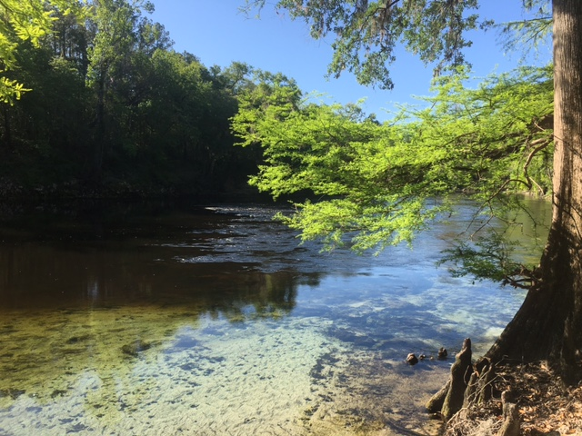 withlacoochee downstream of spring
