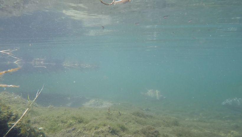 gemini pool
