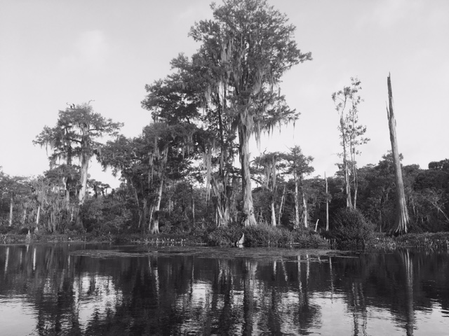 Wakulla tree islands 2