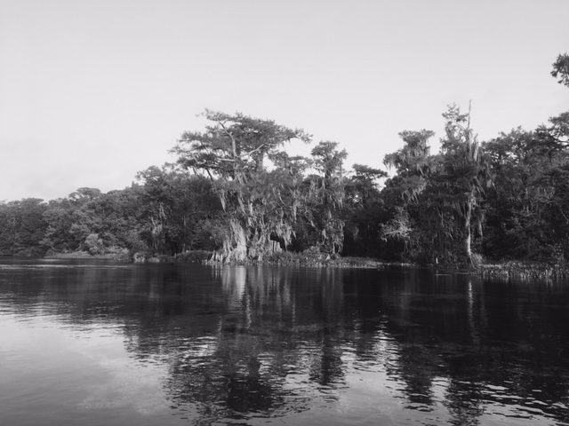 Wakulla tree islands 3